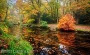 John Dobson - River Teign by John Dobson