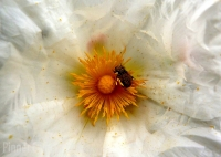 2_POLLINATION by Jim Niblett.jpg