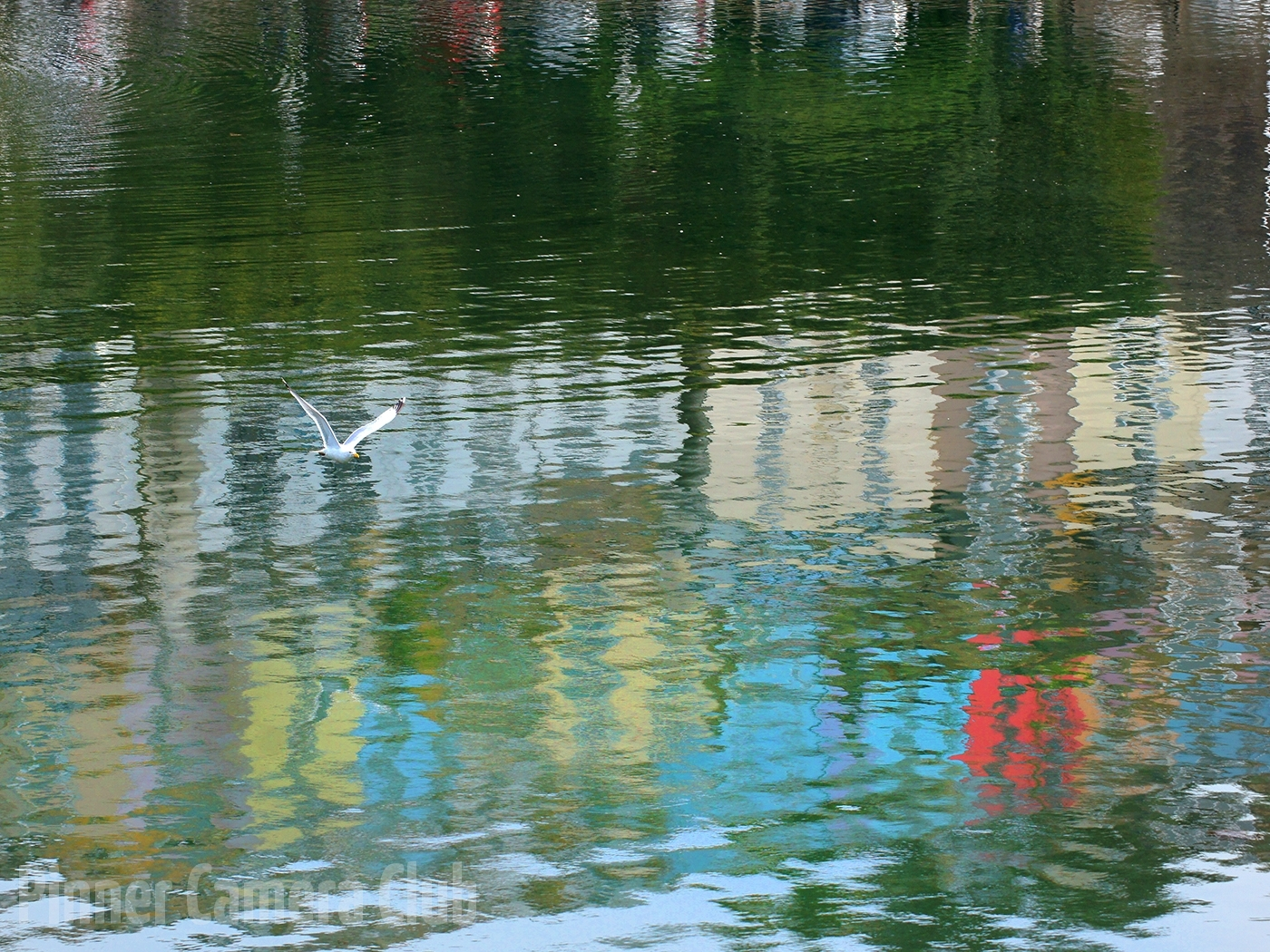 33. GULL AND REFLECTIONS by Les Spitz