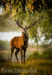Tim Dowd - 4_Stag in the Morning Light