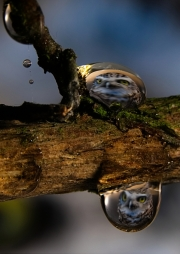 Owl Droplet by Simon Mee