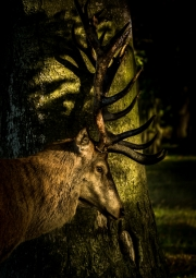 Caught in the Light by Tim Dowd