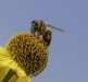 Busy Bee by Angela Rogers