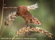 MASTER-OF-BALANCE-by-Natalie-Levy