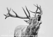 Singing Deer High key