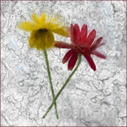 YELLOW-RED-IN-ICE-by-Les-Spitz