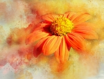 2_Judi-Saunders-DRIPPY-ORANGE-FLOWER-by-Judi-Saunders