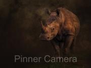 White Rhino Madikwe