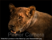 Watchful-Lioness-in-the-Mara-by-Lew-Wasserstein