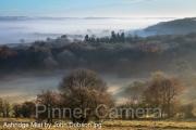 Ashridge Mist