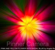 PINK-AND-YELLOW-FLOWER-WITH-RADIAL-BLUR-by-Angela-Rogers
