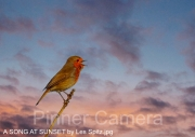 A-SONG-AT-SUNSET-by-Les-Spitz