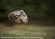 INDIAN EAGLE OWL IN FLIGHT by Simon Mee