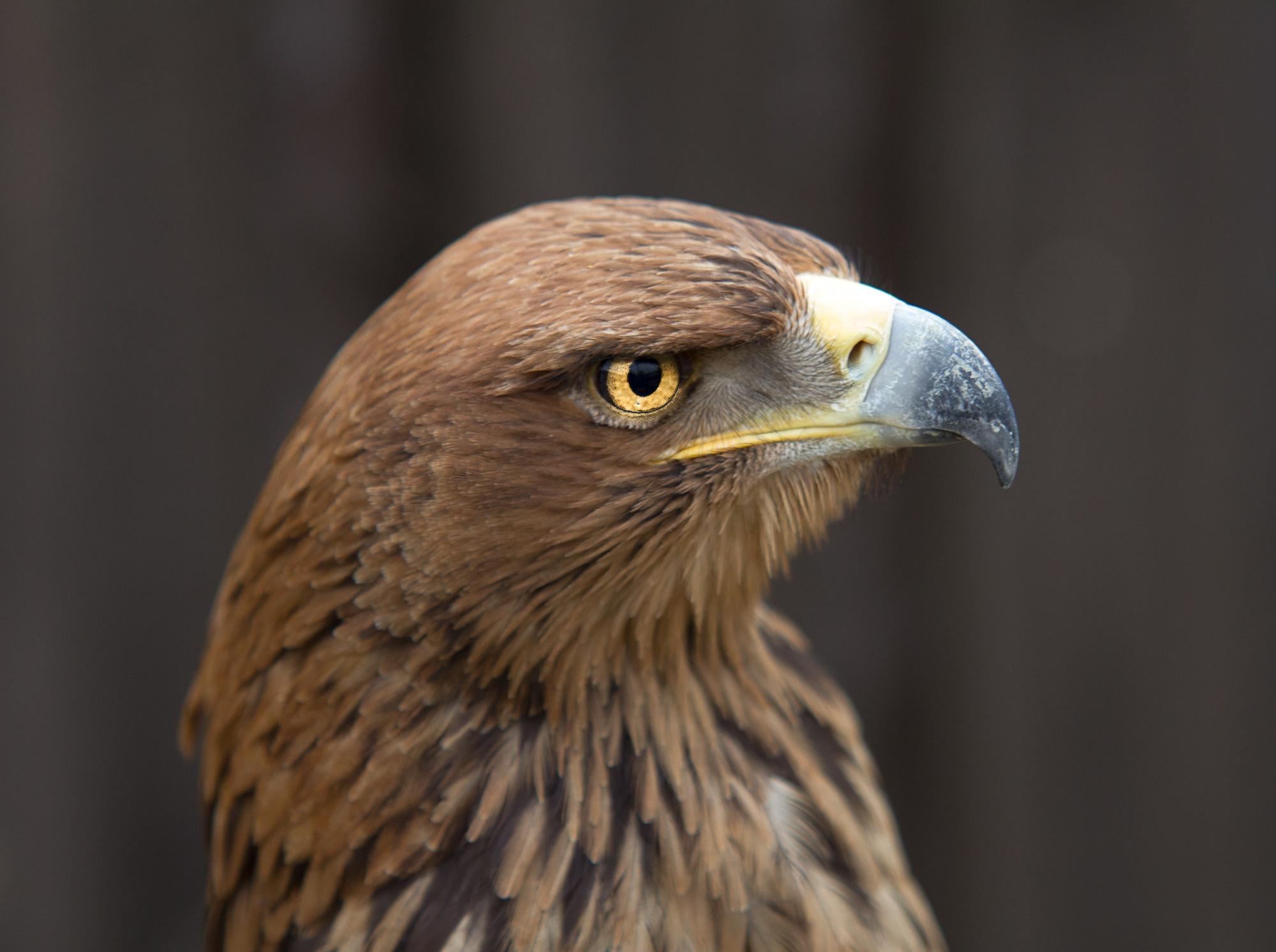 Eagle-Eye