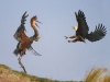 fish-eagle-and-goliath-heron-botswana