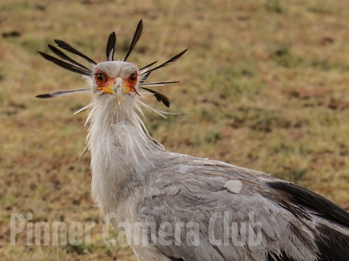 SECRETARY BIRD KENYA