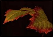 Autumn-Leaf-by-Simon-Mee
