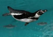 Penguin2-by-Simon-Mee