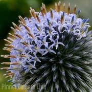 natures-fireworks-by-steven-bockling
