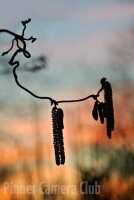 3_CATKINS AFTER SUNSET by Janet Bartlett.jpg