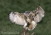 Martin Roberts - EAGLE OWL LANDING by Martin Roberts-small Edit