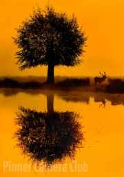 Tim Dowd - 3_Dawn Reflections