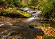Autumn Leaves by Tim Dowd