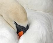 Taking a Nap by Steve Cohen