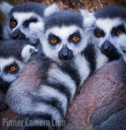Giving You The Eye by Nameer Rattansi