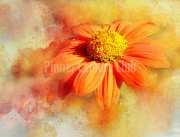 2_Judi-Saunders-DRIPPY-ORANGE-FLOWER-by-Judi-Saunders