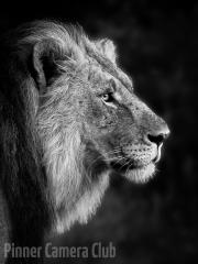 Lion-by-Lew-Wasserstein