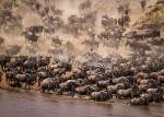 Crossing the Mara