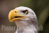 eaglebyelkankohnjpg
