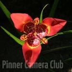 orchidbyelkankohn