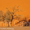 THE-LIVING-DESERT-by-Barry-Kester