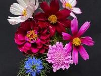 Michael-Lurie-Summer-Blooms
